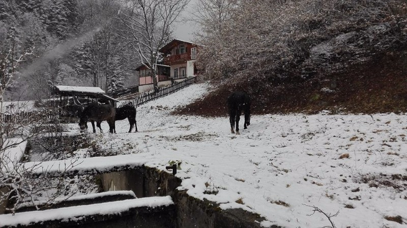 horse-adventures-western-rhodopes-18